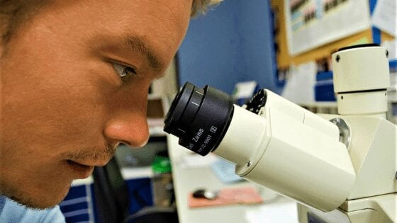 How powerful a microscope do you need to see bacteria